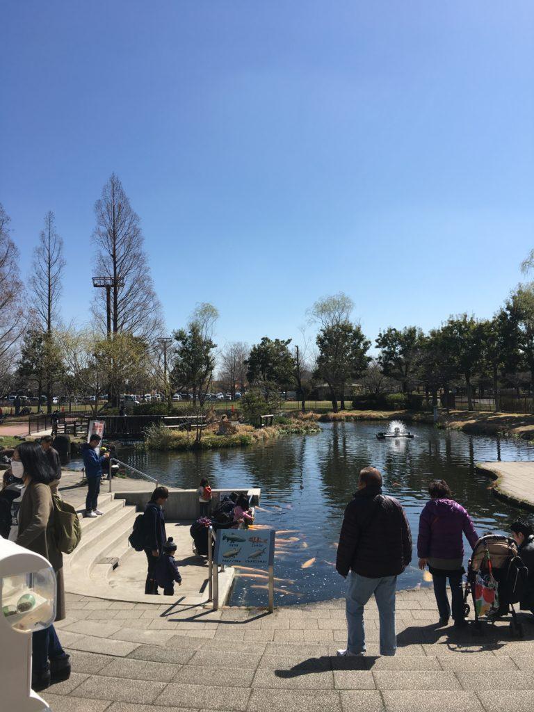 さいたま水族館の池