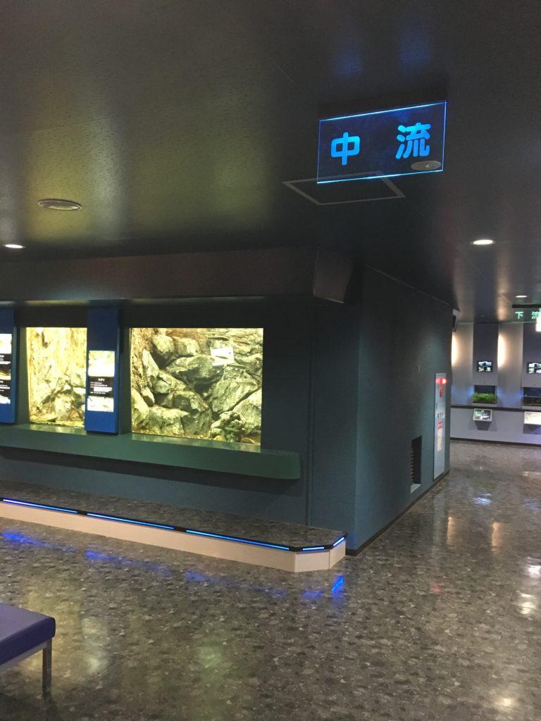 さいたま水族館の中流コーナー