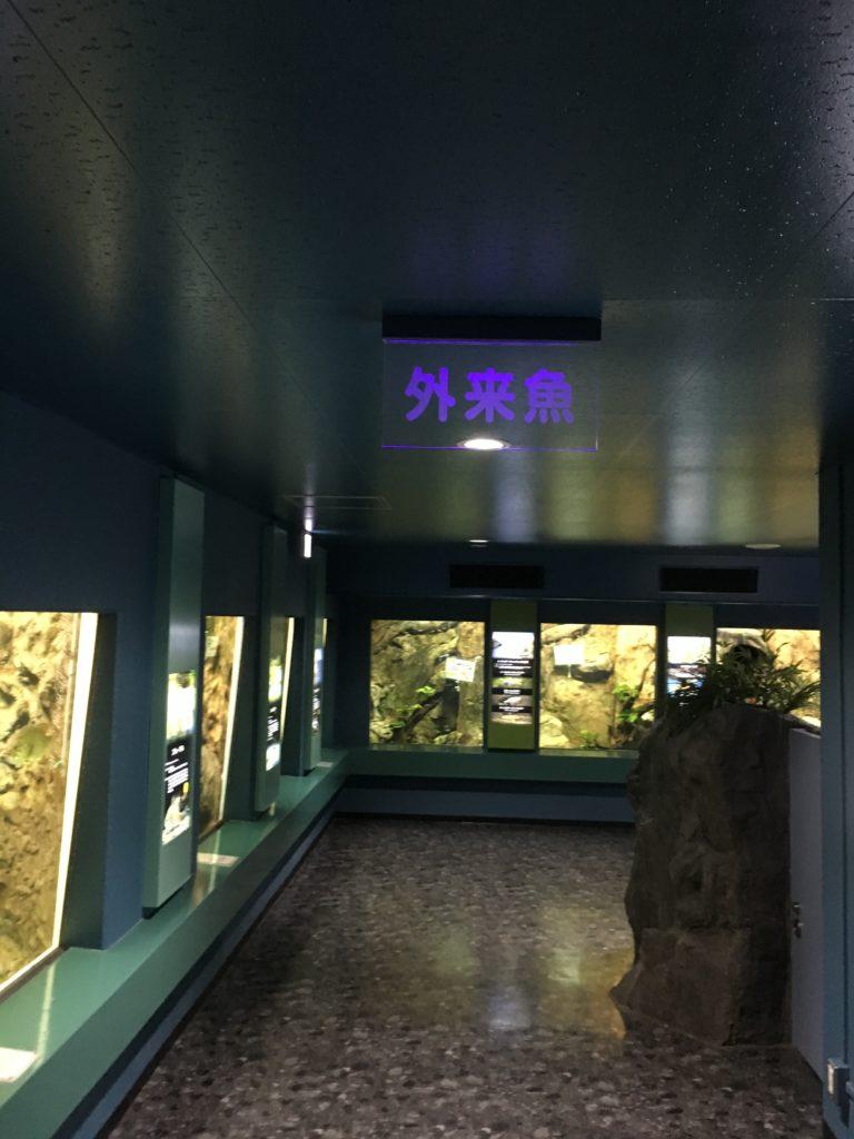 さいたま水族館の外来魚エリア