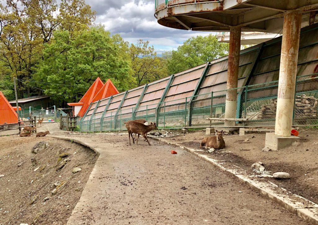 動物園内の鹿