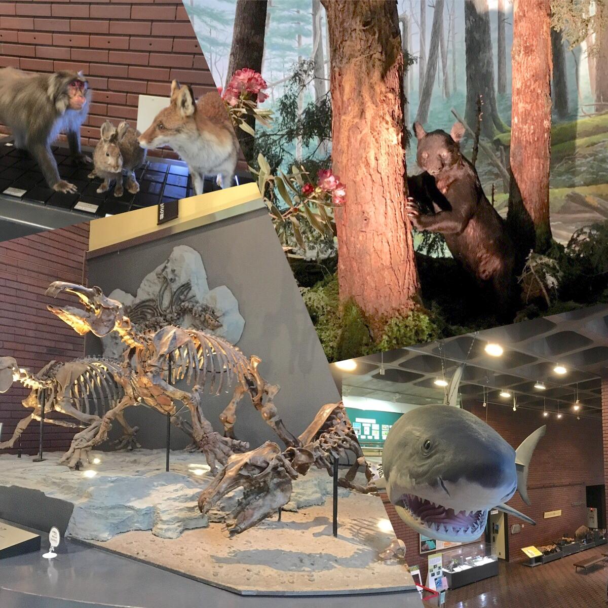 【長瀞・埼玉県立自然の博物館】中学生以下無料!雨でも楽しめる観光スポット