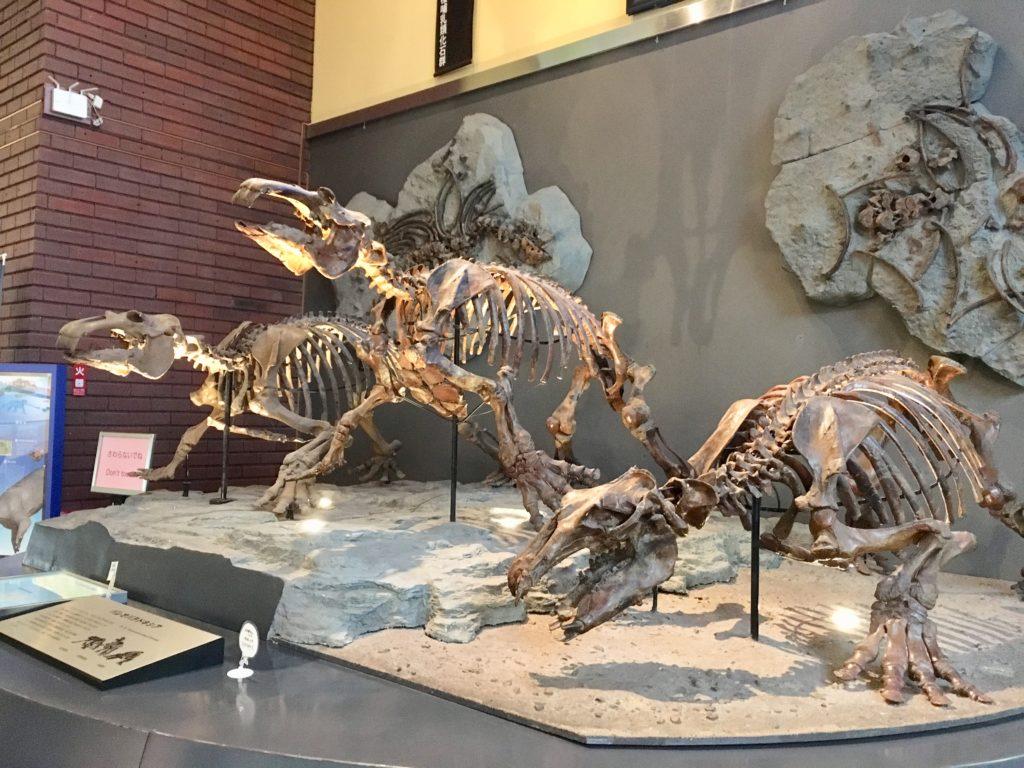 パレドパラドキシアの化石