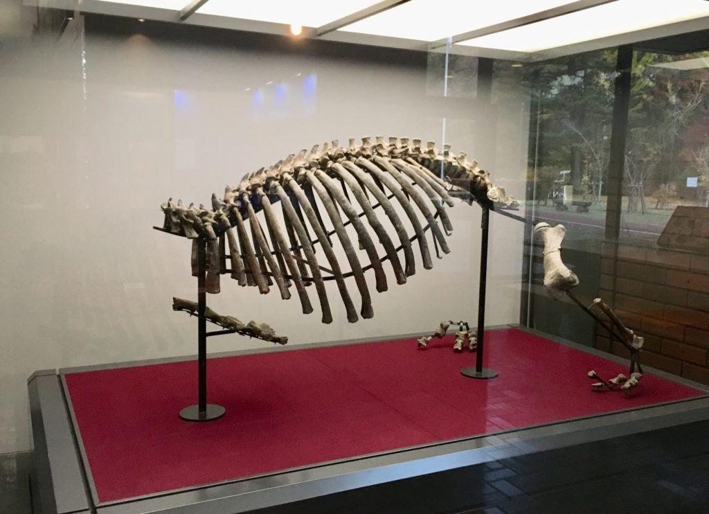 パレドパラドキシアの全体骨格