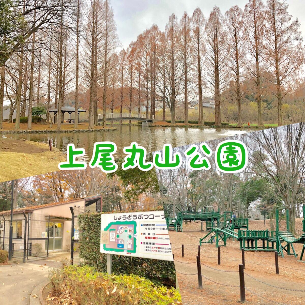上尾丸山公園|市内最大級の公園の魅力をまとめて紹介!