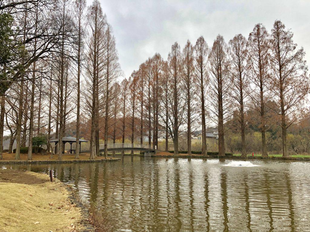 大池のアップ画像