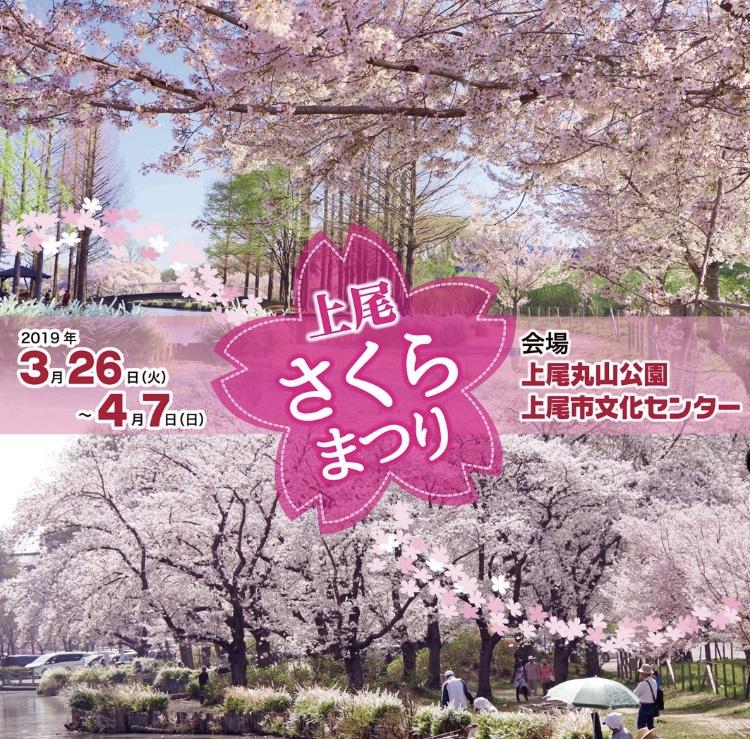 上尾さくらまつり2019|開催場所・期間・花見の見所をまとめて紹介!
