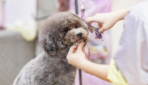 PETDESIGN アリオ上尾店が5月22日ニューオープン!ペット・動物好きには嬉しい♪