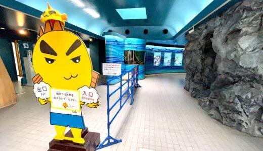 羽生 さいたま水族館 海なし県埼玉唯一の水族館を徹底紹介!
